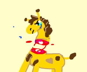 Giraffe decapitation