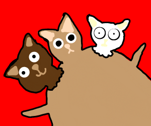 three headed cat has multiple personalities