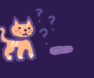 Cat finds purple cucumber