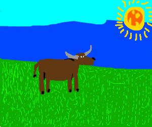 Bull in a feild of grass