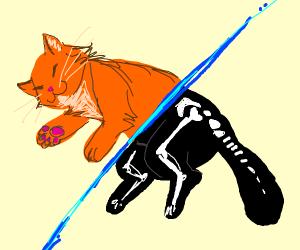 The cat of schrodinger