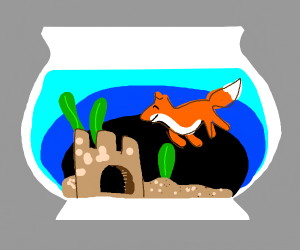 fox in an aquarium