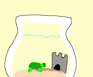 Turtle in fishbowl