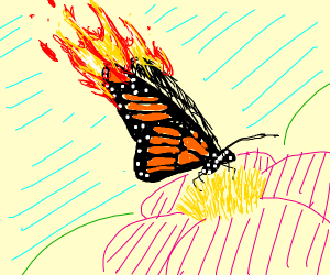 Fire winged butterfly