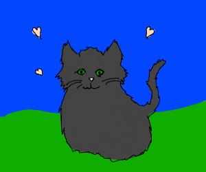 a dark grey cat