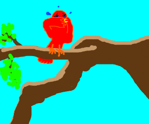 red bird cries on a branch