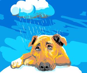 a sad dog with its personal rain cloud