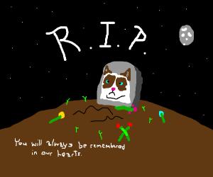 R.I.P Grumpy cat