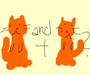 Cat and... cat?