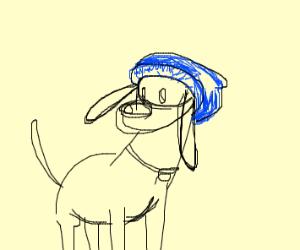 dog wearing beanie
