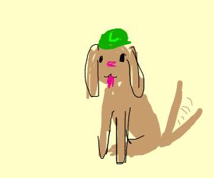 Luigi Doggo