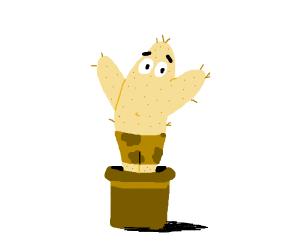 Patrick is a cactus