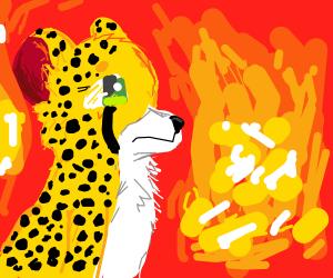 a leopard in a fire