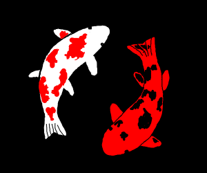 Beautiful koi fish, yin and yang
