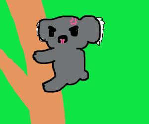 Angry Koala on a tree