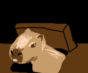 Capybara from the Attic