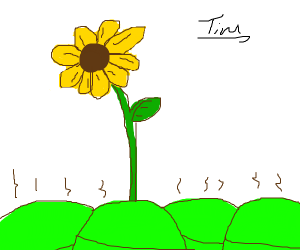 Green buns surrounding a flower