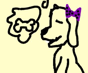 cute dog wants bone