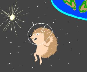 space hedgehog