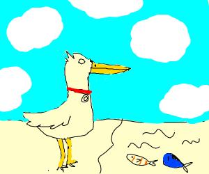 Pet Pelican