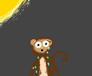 sweating monkey