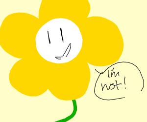 One good looking flower