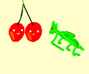 cherries gazing at a grasshopper