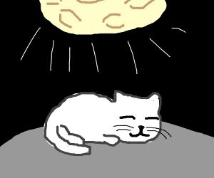 cat sleeping under the moonlight