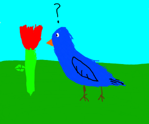 blue bird curious about flower