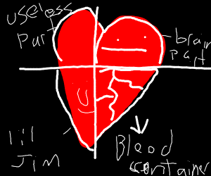 A very detailed cross section of heart