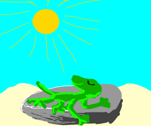 Lizard sunbathing on a rock