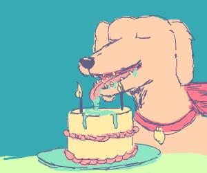 Doggo celebrates a birthday