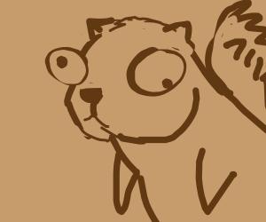 Confused squirrel