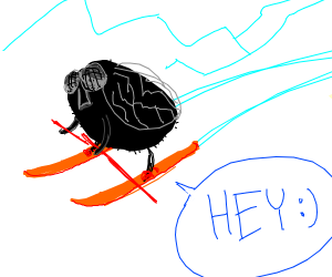 skiing fly says hey !