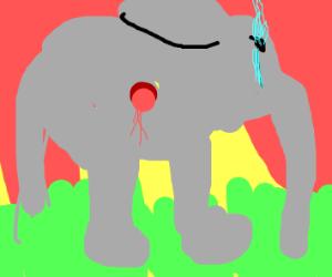 Elephant at sun-down