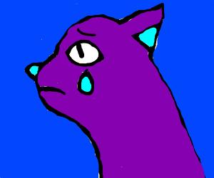 cat crying