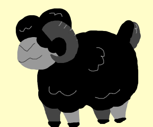 Sheep crossed with ram