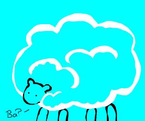 Sheep with long hair