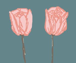 .: twin tulips :.