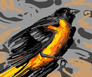 Dead colourful bird