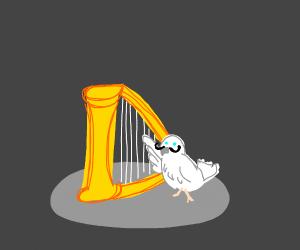 mustachio dove plays harp