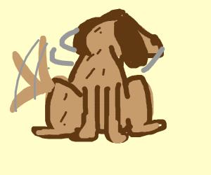 Dog looks at something behind him
