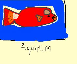 pet parrotfish