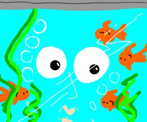 Looking at fish in an aquarium
