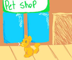 cat outside a pet store