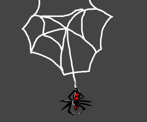 A black widow making her web