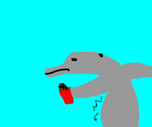 Dolphin has eaten too much chocolate