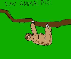 favorite animal pio ( lizard )
