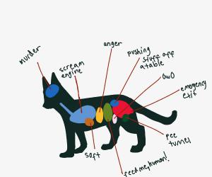cat organs