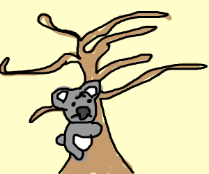 Sad koala on a dead tree